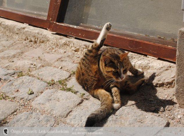 Bozcaada'da da kediler 1