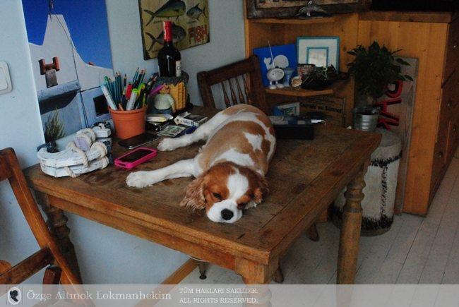 Bakkal'ın sahibi Burak'ın köpeği Paris 1