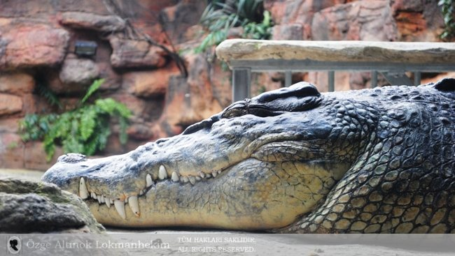 Sidney Wildlife Park 1
