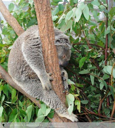 Wildlife Park Aquarium Sydney Tower Manly OceanWorld 2