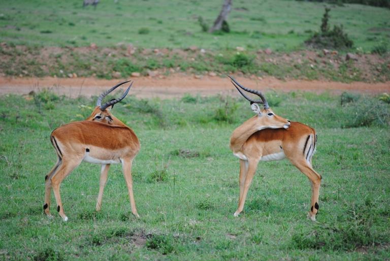 JAMBO KENYA ! Masai Mara'da Safari 11
