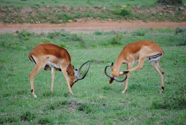 JAMBO KENYA ! Masai Mara'da Safari 12