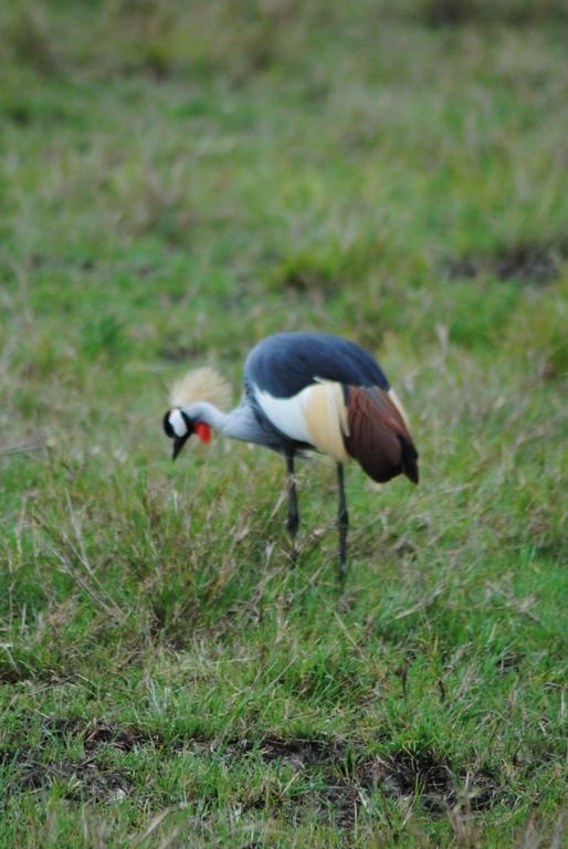 JAMBO KENYA ! Masai Mara'da Safari 16