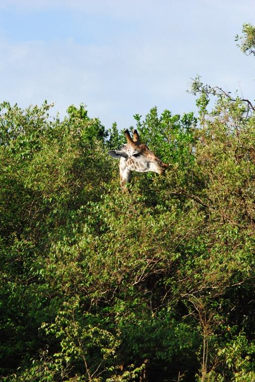 JAMBO KENYA ! Masai Mara'da Safari 17
