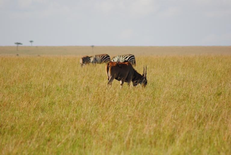 JAMBO KENYA ! Masai Mara'da Safari 20