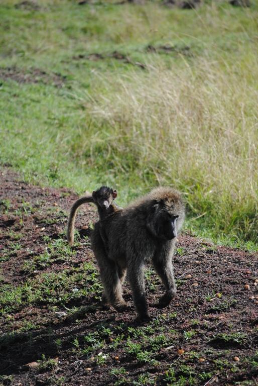 JAMBO KENYA ! Masai Mara'da Safari 21