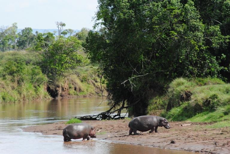 JAMBO KENYA ! Masai Mara'da Safari 23