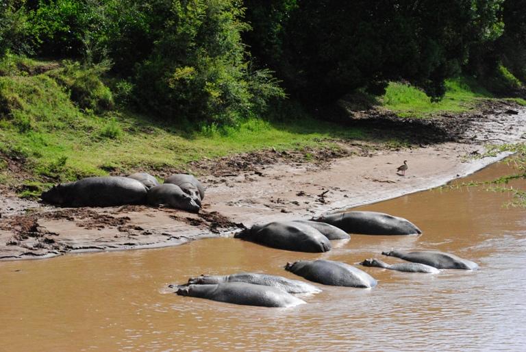 JAMBO KENYA ! Masai Mara'da Safari 24