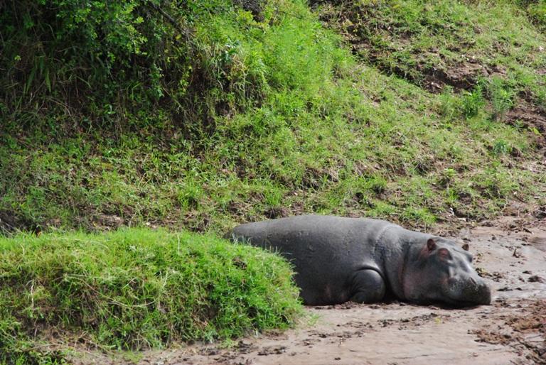 JAMBO KENYA ! Masai Mara'da Safari 25