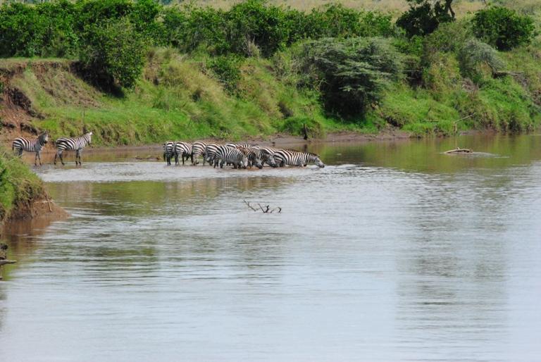 JAMBO KENYA ! Masai Mara'da Safari 36
