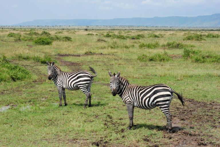 JAMBO KENYA ! Masai Mara'da Safari 27