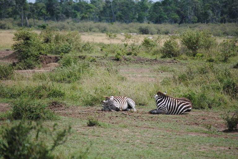 JAMBO KENYA ! Masai Mara'da Safari 28