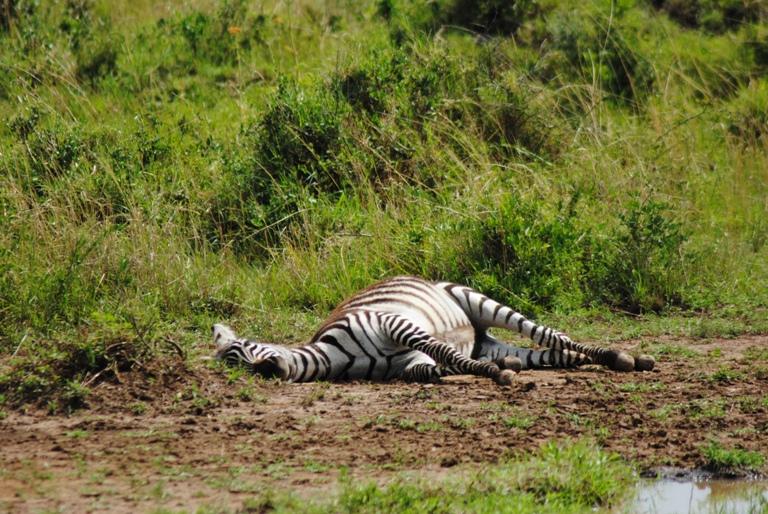 JAMBO KENYA ! Masai Mara'da Safari 29