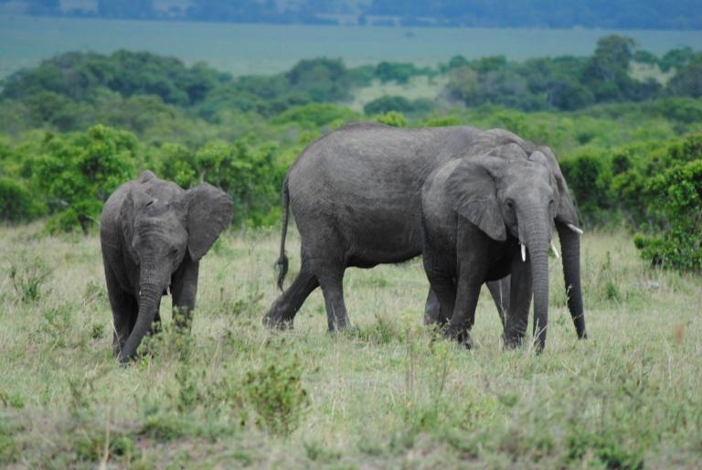JAMBO KENYA ! Masai Mara'da Safari 34