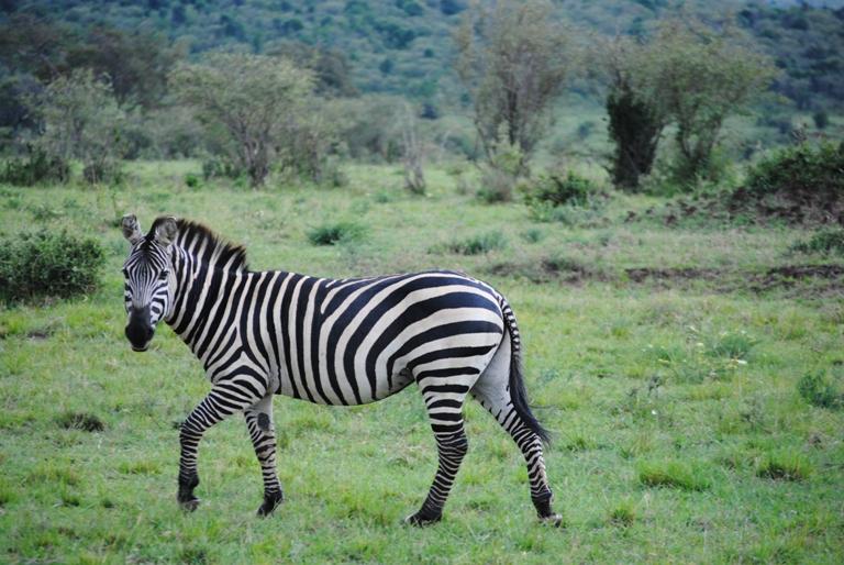 JAMBO KENYA ! Masai Mara'da Safari 35