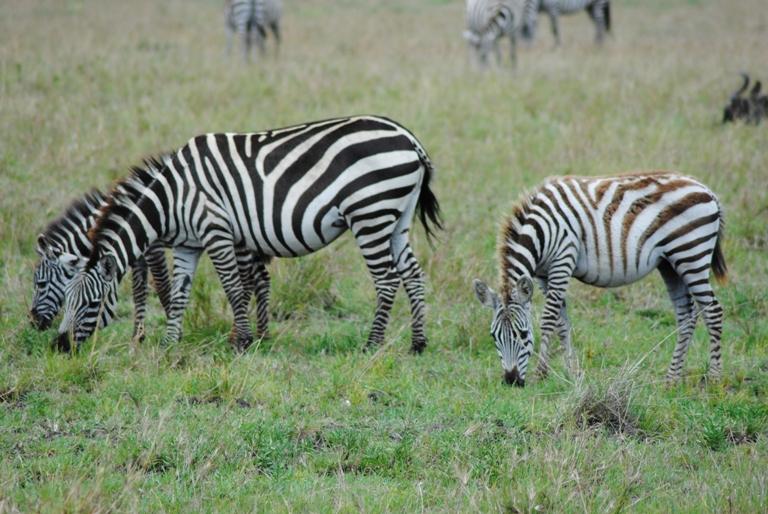JAMBO KENYA ! Masai Mara'da Safari 9