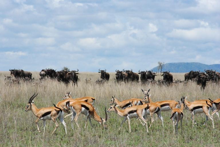 Kenya Safari 10