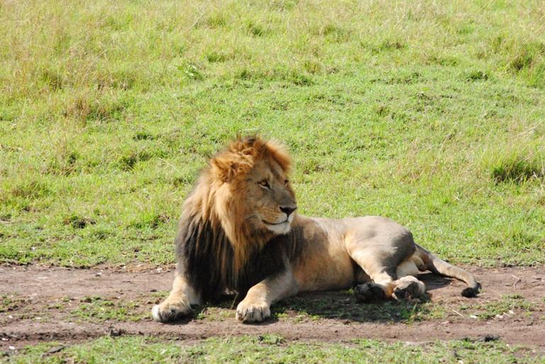 Kenya Safari 9