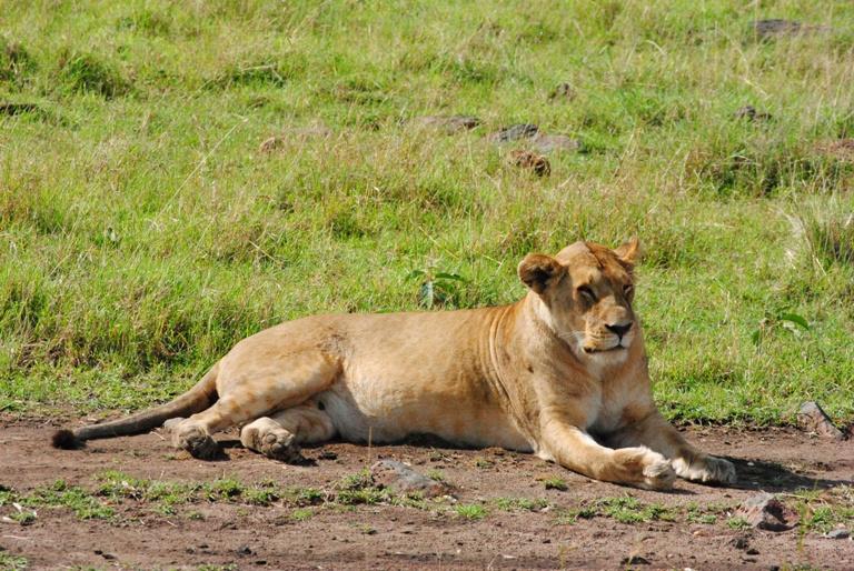Kenya Safari 8