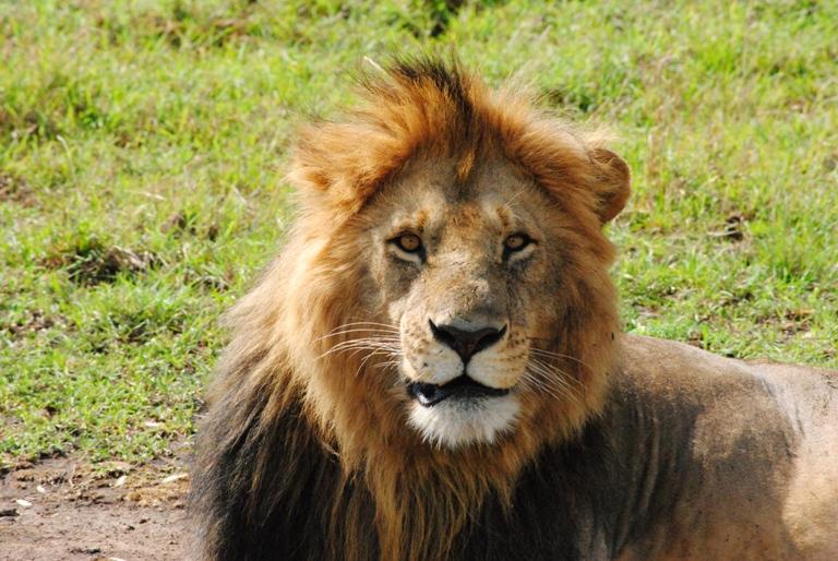 Kenya Safari 7