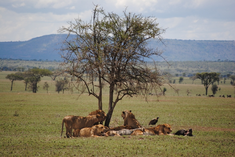Kenya Safari 2